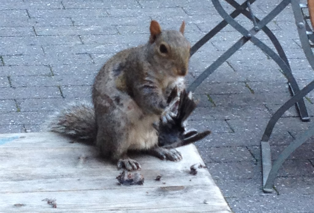 Squirrel Eating a Bird