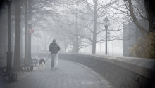 Dog walker in the Fog